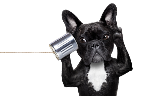 Bulldogge telefoniert mit selbstgebasteltem Blechdosen-Telefon. Erzähl mir mehr: Storytelling ist auch für anspruchsvolle B2B-Themen ein Plus