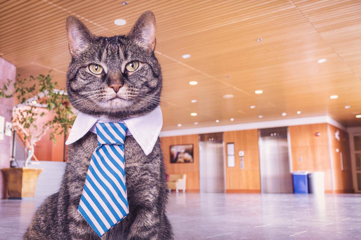Wie man ein Experten-Interview führt – mit jedem Interviewpartner